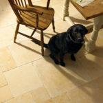 Известковая плитка и собака